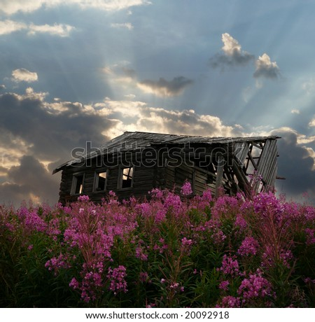 old shed in willow herb, sky see though roof - stock photo