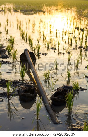 Old shoes with hoes was left on the muddy water in the paddy fields. - stock photo