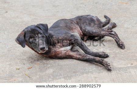 old sick black dog lay down on the street - stock photo