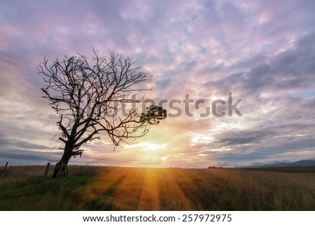 old sinister and dying tree with bare branches against a dramatic clouded background with bright sun shining through - stock photo