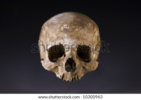 Old skull close-up - stock photo