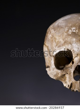 Old skull close-up 3. Half side with space for text - stock photo