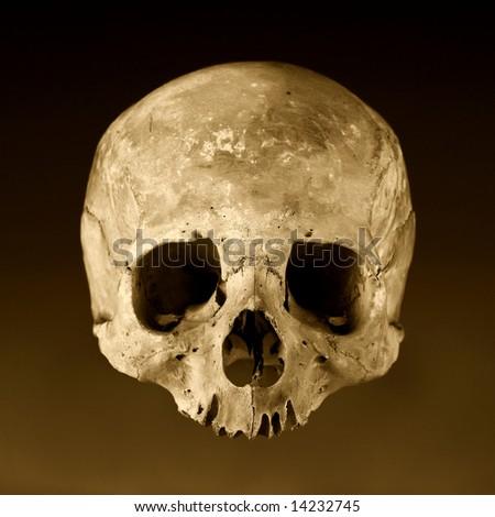 Old skull close-up 2. Sepia version - stock photo