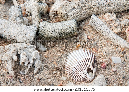 Old solid coral rock into a beautiful white. - stock photo