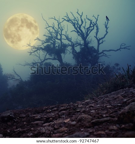 Old spooky tree - stock photo