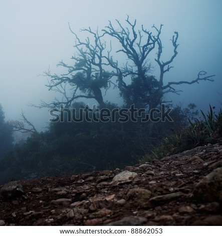 Old spooky tree  in the morning - stock photo