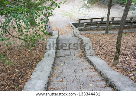 Old staircase in the forest