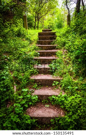 Old stairs and surrounding vegetation at Codorus State Park, Pennsylvania. - stock photo
