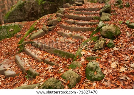 Old steps in a forest during the autumn time. - stock photo