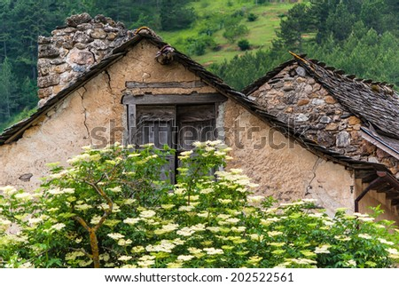 Old stone building behind elder tree in rural landscape.