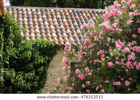 house flowers stock images, royalty-free images & vectors