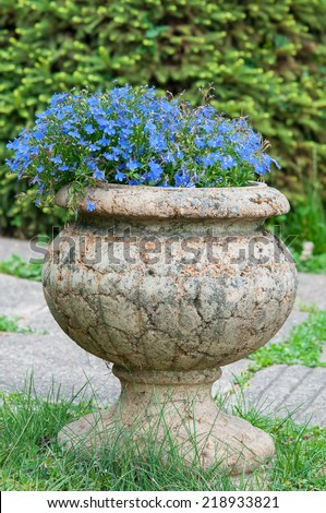Old stone vase with blue blooming flowers in a garden. - stock photo
