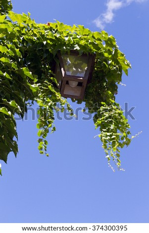 Old street lamp covered with vines. - stock photo