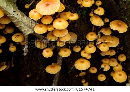 Old stump moss wrapped with bunch orange fungus grows over - stock photo