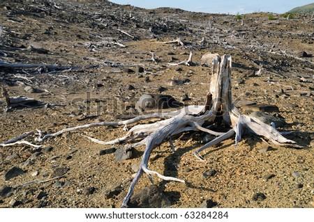Old stumps - stock photo