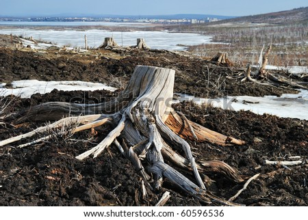 Old stumps near to metallurgical factories. - stock photo