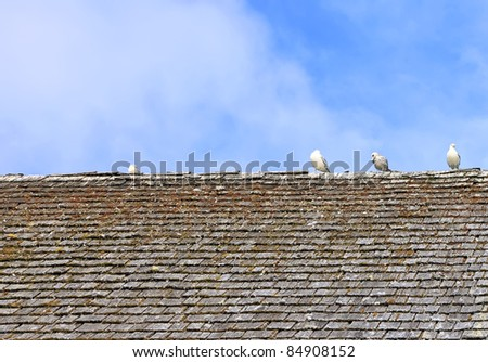 Old tile roof and seagulls sitting on it