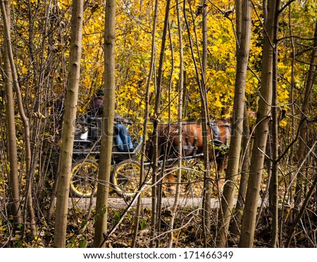 Old times idea. Horse driven carriage with two men in autumn forest. - stock photo