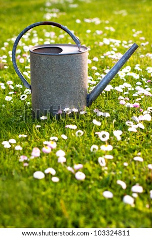 Old tin watering can in a green meadow with white blossoms