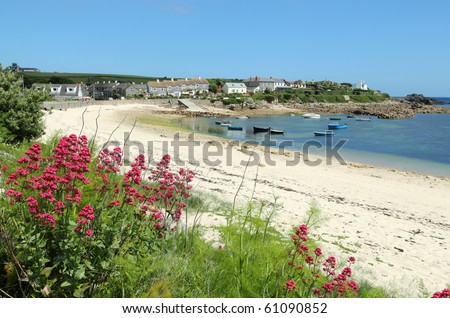 Old town beach red valerian, St. Mary's, Isles of Scilly, Cornwall UK. - stock photo