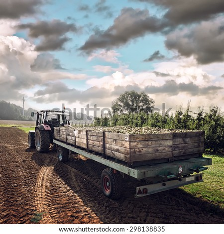 Old tractor carrying wooden crates with freshly harvested pears - stock photo