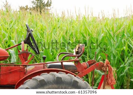 Old tractor in front of field corn soon to be a Halloween corn maze. - stock photo