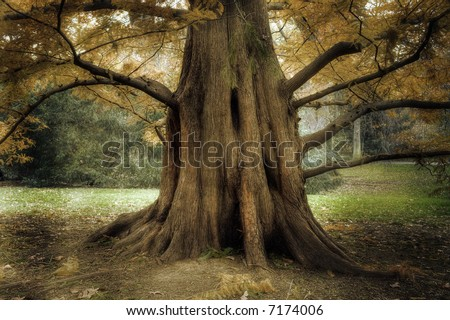 Old Tree - stock photo