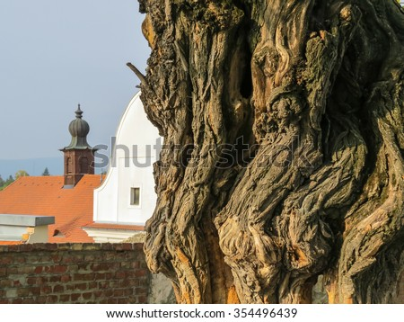 Old tree against Szentendre city, Hungary - stock photo