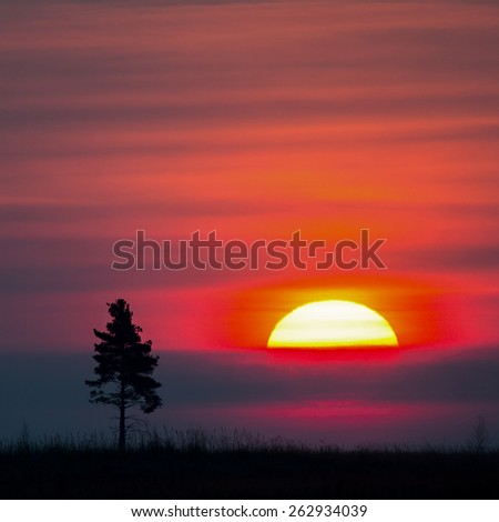 Old tree against the morning sun. Breaking Dawn. - stock photo
