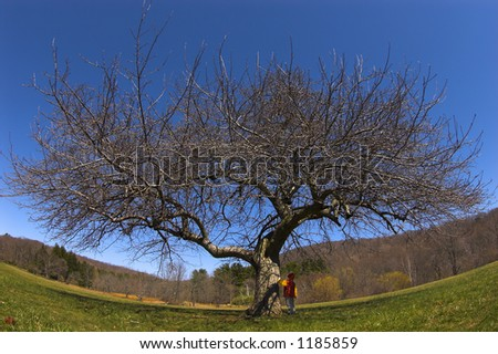 Old tree and boy