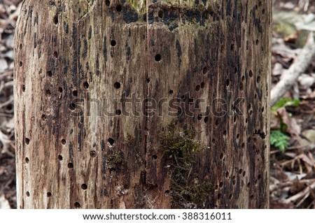 Woodpecker Hole Stock Photos, Royalty-Free Images & Vectors ...