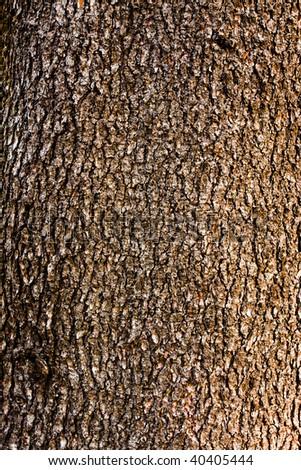 Old tree bark texture - stock photo