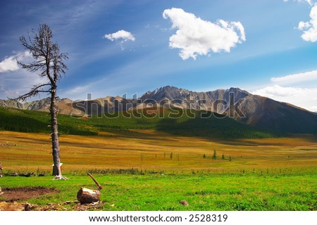 Old tree, blue sky and mountains. Altay. Russia. - stock photo
