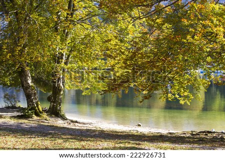 Old tree by the Bohinj lake, Slovenia - stock photo