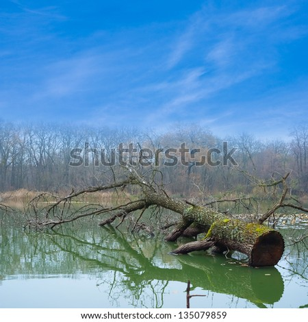 old tree drown in a river