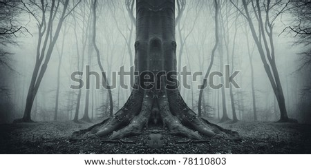 old tree in a dark forest - stock photo