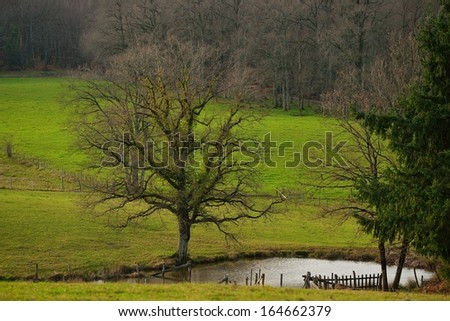 Old tree in a meadow in winter and pond, France