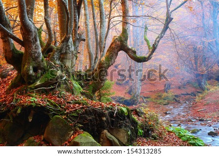 Old tree in autumn forest - stock photo