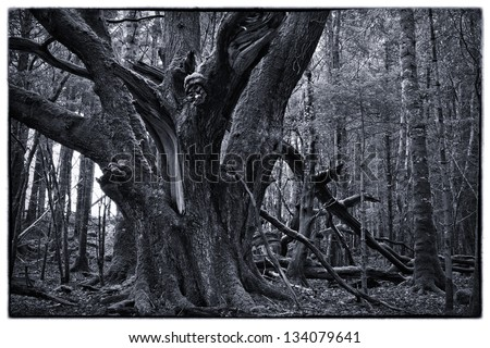Old tree in young forest - stock photo