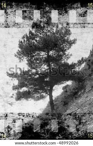 Old tree on film strip background - stock photo