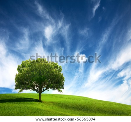 Old tree on green field - stock photo