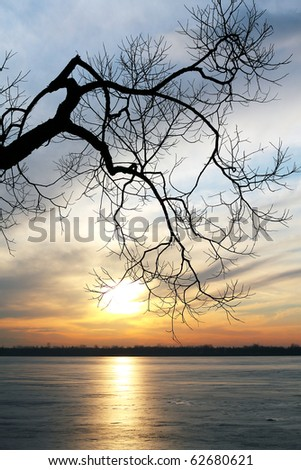 Old tree over a frozen lake at sunset - stock photo