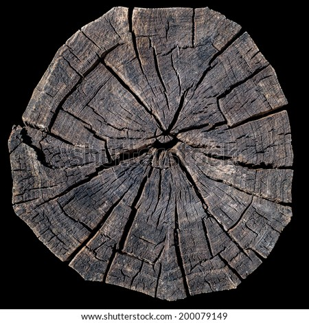 Old tree rings on a black background - stock photo