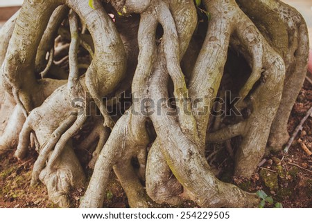 Old tree roots texture (background) - stock photo
