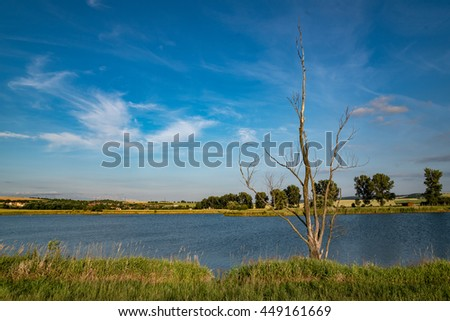 old tree standing alone a lakeside with dreamy sky and happy view - stock photo