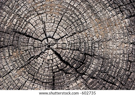 Old tree stump. - stock photo