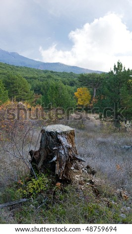 old tree stump in mountain forest - stock photo