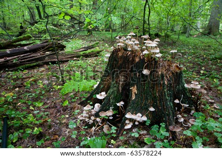 Old tree stump with lot of fungus grows over - stock photo