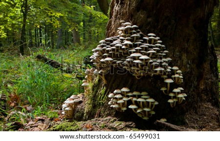 Old tree trunk almost declined with lots of fungus grows over - stock photo