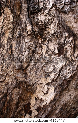 old tree trunk (detail)